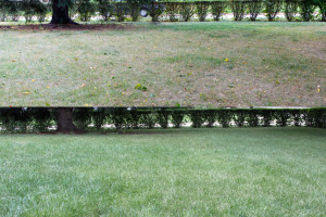 Before-&-After MN LAWN