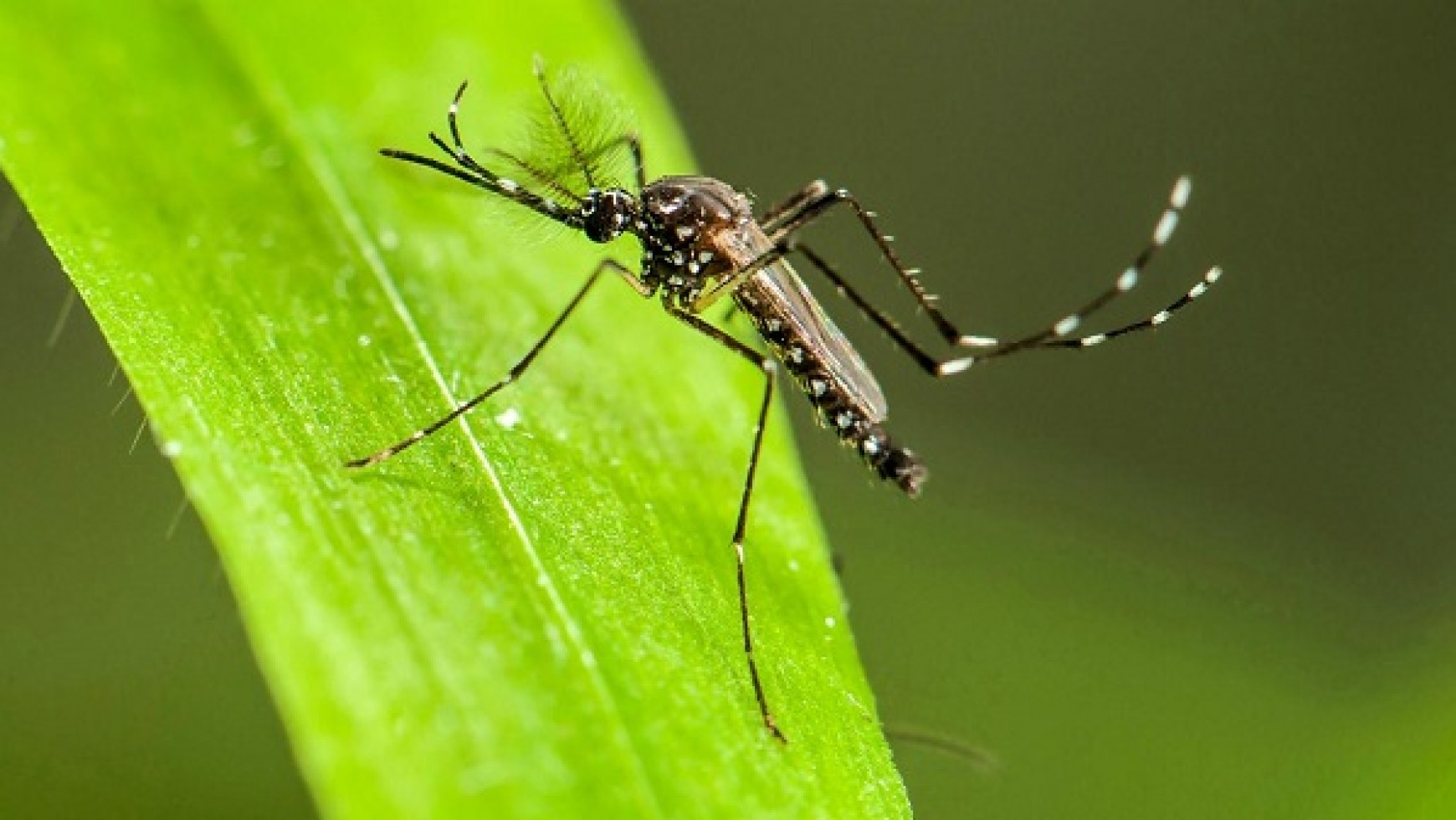 Mosquito Control Minneapolis – How To Get Rid Of Them