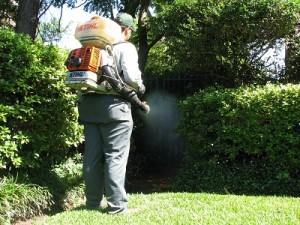 Mosquito Control Service