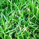 Lawn Care Service New Hope, Lawn Care Service New Hope, Lawn Care Service Minneapolis, Lawn Care Service Minneapolis