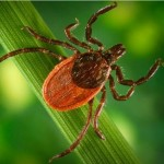 Ticks, Ants, Mosquitoes OH MY!