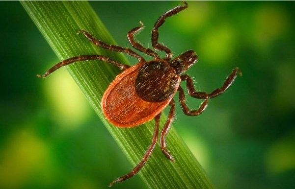 , Ticks, Ants, Mosquitoes OH MY!, Lawn Care Service Minneapolis, Lawn Care Service Minneapolis