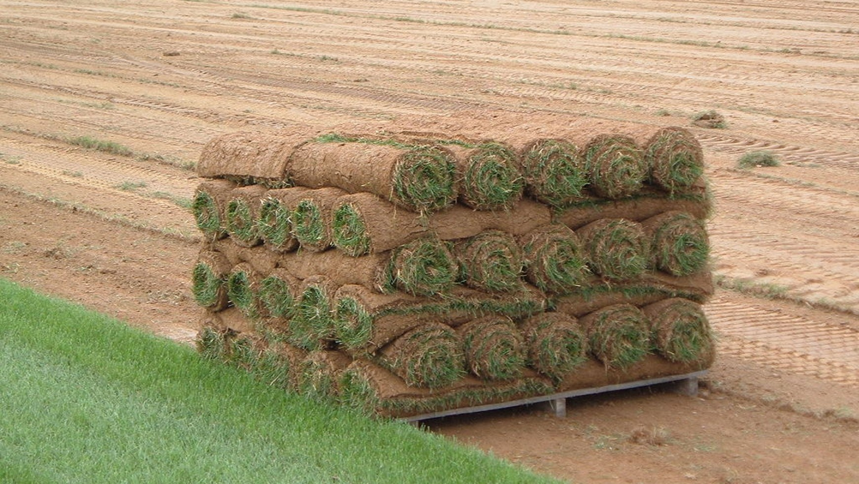 Lawn Care Tips for New Sod